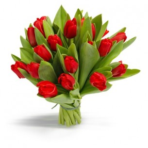 Tulipa furiosa