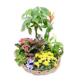 Hoog plantenarrangement