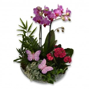 Orchidplant-arrangement