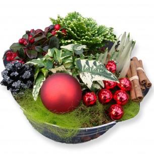 Kerst-plantenarrangement