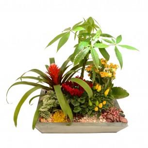 Composition de plantes moderne