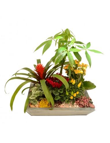 Modern composition of indoorplants