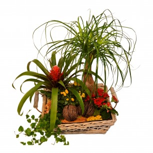 Plant arrangement in basket