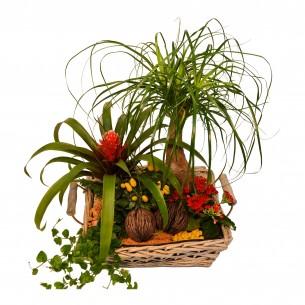 Plantenarrangementje in mand