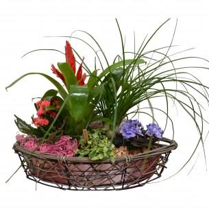 Plantenschaal met groene en...