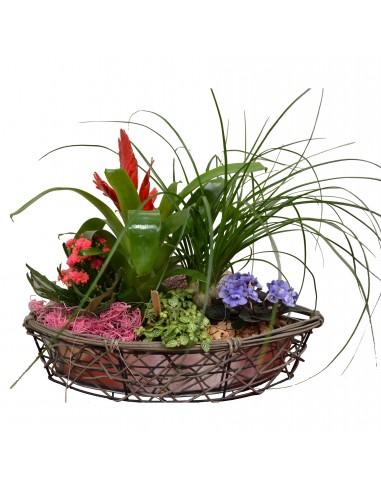Arrangement of green and flowering...