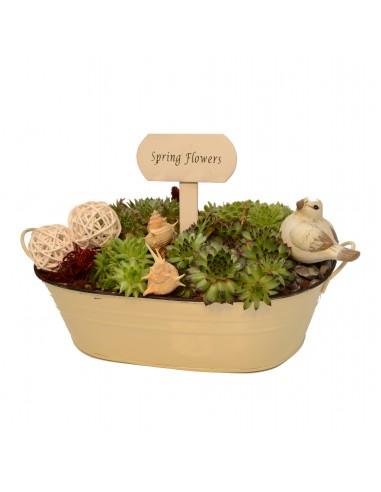 Terras-arrangement with succulents